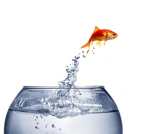 fish out of water professional and personal musings from